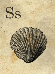 s - sweetly scrapped - sea shell