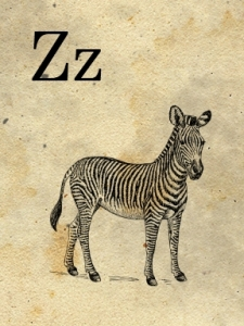 z- zebra - sweetly scrapped